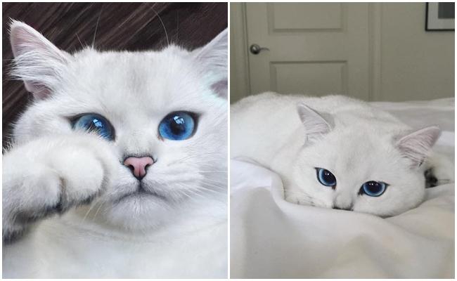Büyüleneceksiniz: Sizi Aşkla Miyavlatabilecek Kadar Güzel Gözleri Olan Kedicik Coby