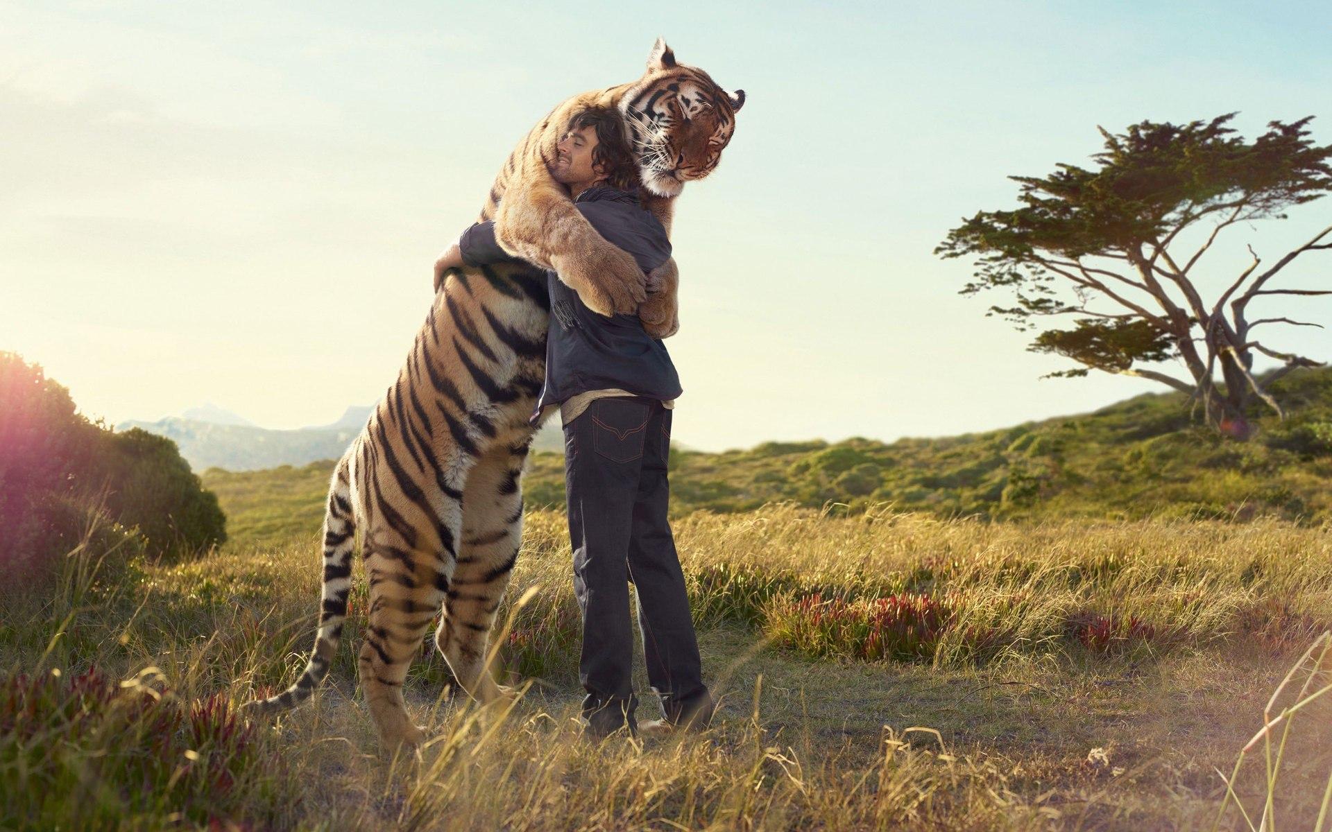 hayvanlari-sevmeki-hayvan-sevgisi-koala-hayvan-sevgisi-ile-ilgili-sözler-kaplan