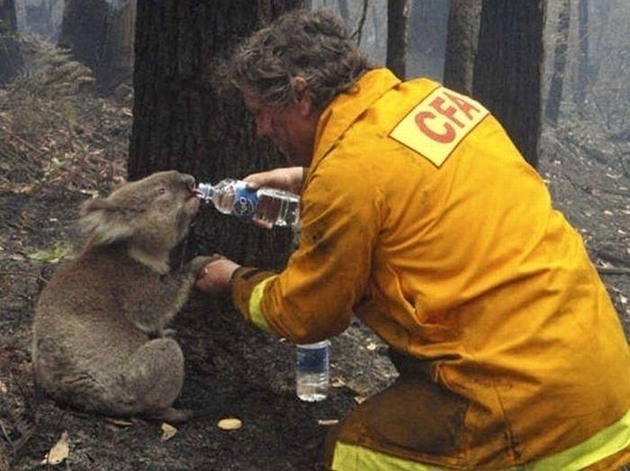 hayvanlari-sevmeki-hayvan-sevgisi-koala-hayvansever-sözler