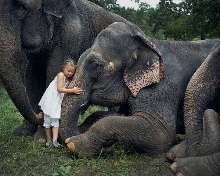 hayvanlari-sevmeki-hayvan-sevgisi-kopekler-fil