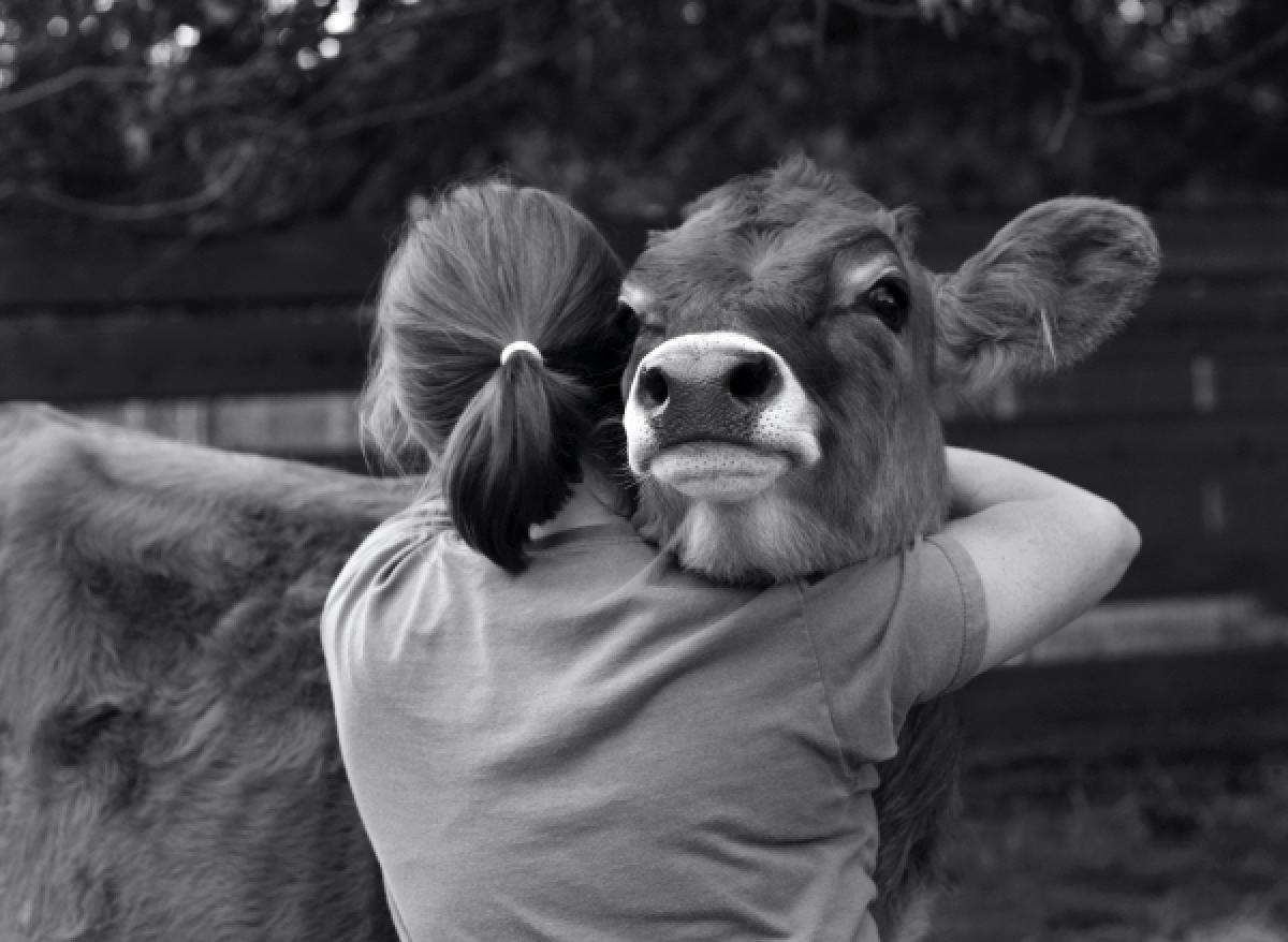 hayvanlari-sevmeki-hayvan-sevgisi-sözleri-inek
