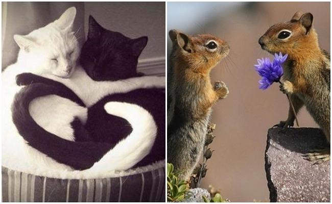 """/""""Bize Her Gün Sevgililer Günü"""" Lafını Aşkla Kanıtlamış 12 Sevimli Hayvan"""