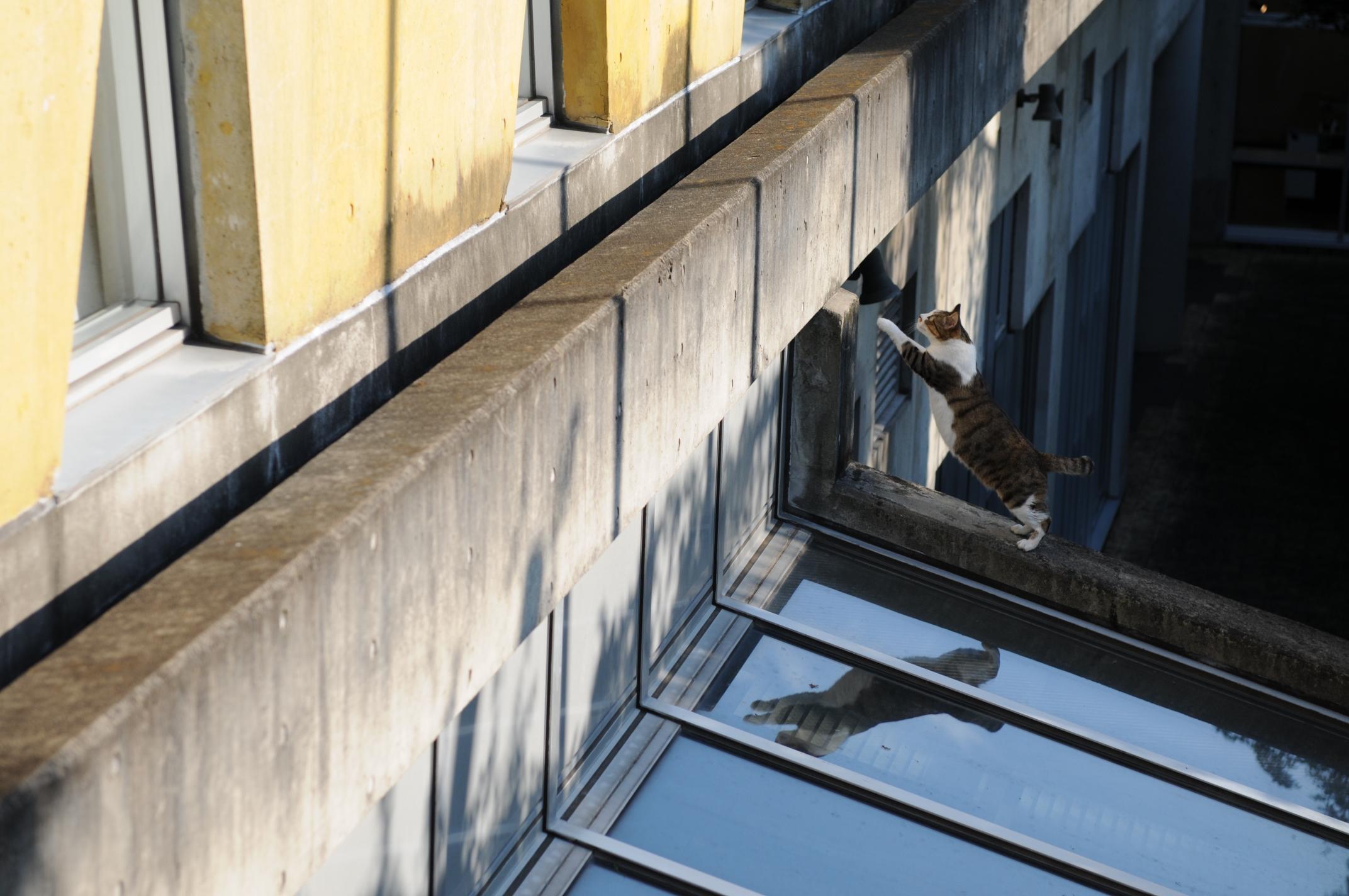 tekir-kedi-kacmis-patiliyo-kediler-hayvanlar-alemi