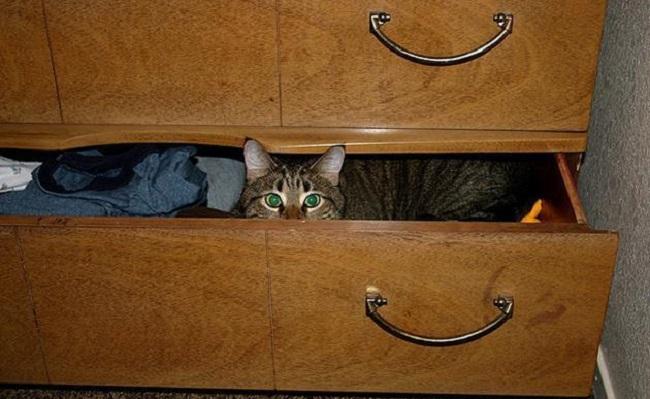 Tekir Kediler ve Tekir Kedi Sahiplerinin Anlayabileceği 9 Şey