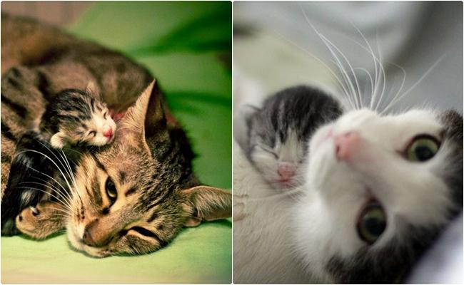 Minnak Yavrularıyla İlk Kez Tanışan 14 Anne Kedi