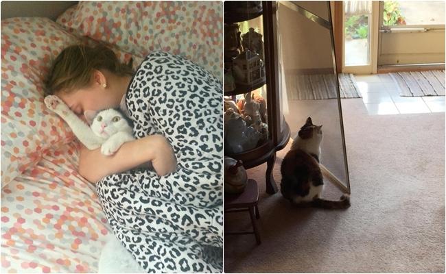 Kafası Fena Halde Karışmış 11 Sevimli Kedi