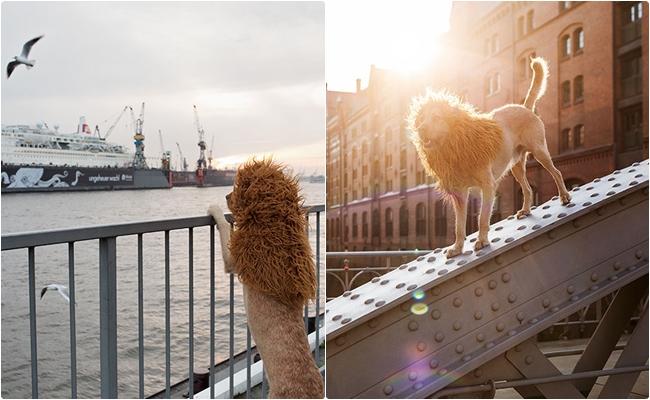 Aslanlar Gibi Olan Evsiz Köpeğin Ruhunuzu Büyüleyecek 15 Masalsı Fotoğrafı
