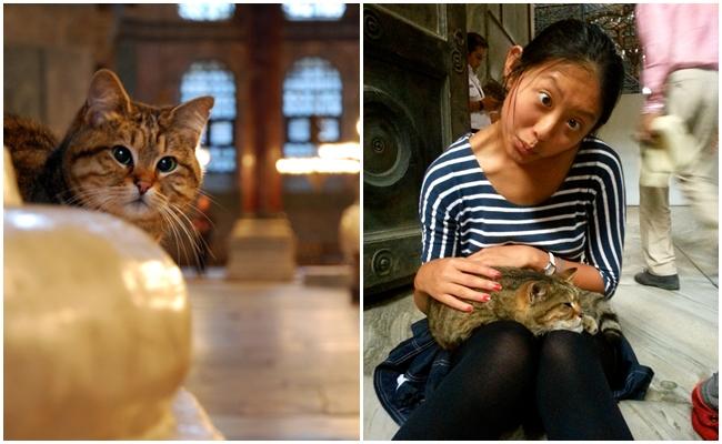 Ayasofya'nın Koruyucusu Şaşı Kedi Gli'nin Hayatından 21 Şirin Fotoğraf