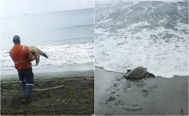 Deniz Kaplumbağalarını Pazardan Satın Alıp Okyanusa Bırakan Koca Yürekli Adamlar