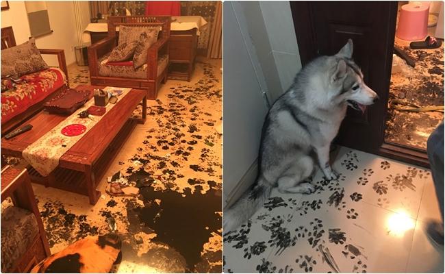 """Evde 3 Saat Yalnız Kalan Köpeğin Sanat Eseri Niteliğindeki """"İşinden"""" 7 Fotoğraf"""