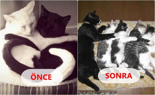 Evlilik Öncesini ve Sonrasını Kedilerle Anlatmanın 14 Yolu