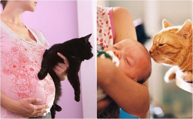 Öğrenelim: Hamilelikte Kedi Beslemek Güvenli midir?