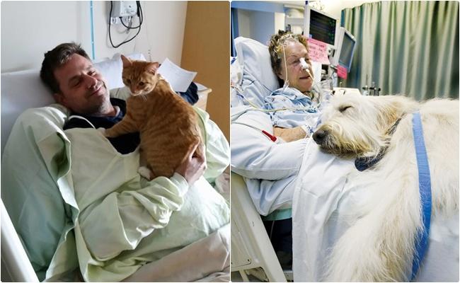 Durumu Ağır Olan Hastaları Sevginin Gücüyle İyileştirmeye Çalışan Evcil Hayvanlar