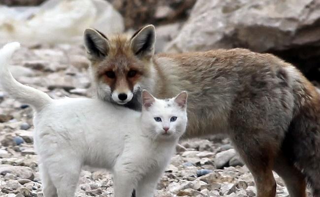Kedilerin Tüm Canlılarla Arkadaş Olabileceğini Kanıtı 21 Sevgi Dolu Fotoğraf