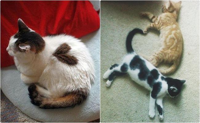 """Kedilerin Aslında """"Kalp"""" Olduklarını Kanıtlayan 15 Sevgi Dolu Fotoğraf"""