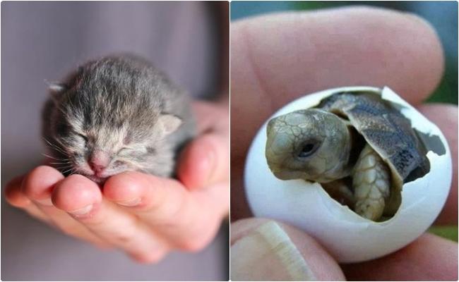 Anneliğin Her Canlıda Kutsal Olduğunun Kanıtı 25 Yeni Doğmuş Yavru Hayvan