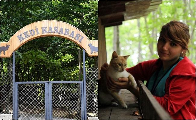 Samsun'daki Kedi Kasabası'ndan Hayallerin Gerçekleşebileceğine Kanıt 12 Fotoğraf