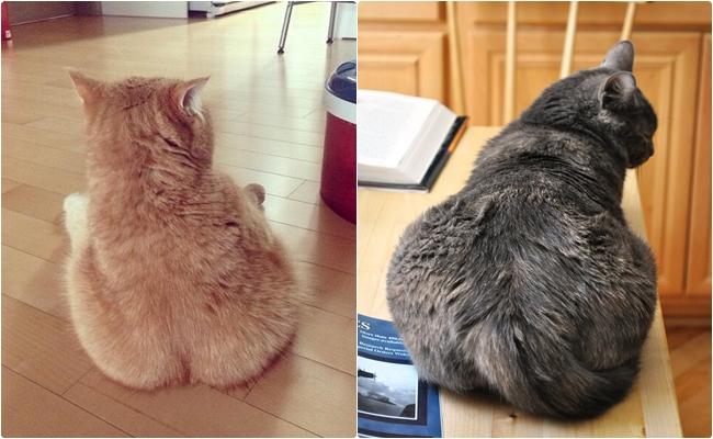 Gördüğünüzde Kocaman Bir Isırık Almak İsteyeceğiniz 16 Kedi Poposu