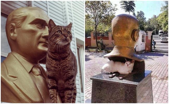 Kendilerini Atatürk'ün Yanında Aşırı Güvende Hisseden 9 Kedi