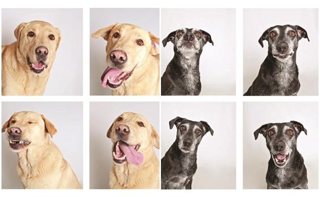 Barınak Köpeklerinin Fotoğraflarını Çekerek Yuva Bulmalarını Sağlayan İyilik Abidesi Fotoğrafçı