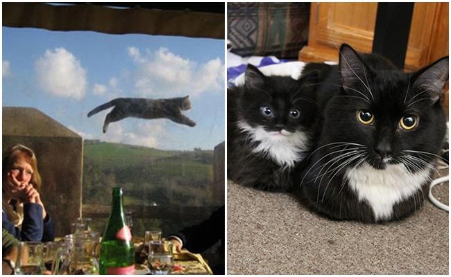 Kedilerin Aslında Dünyayı Ele Geçirebileceğine Kanıt 16 Gizli Kedi Yeteneği