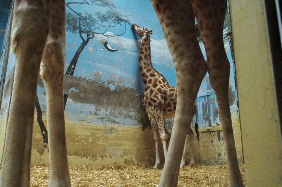 hayvanat-bahceleri-yasaklansin-patiliyo-2