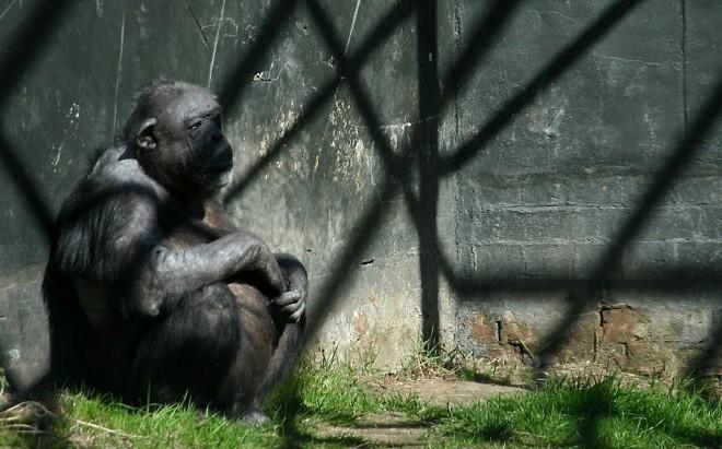 hayvanat-bahceleri-yasaklansin-patiliyo-6