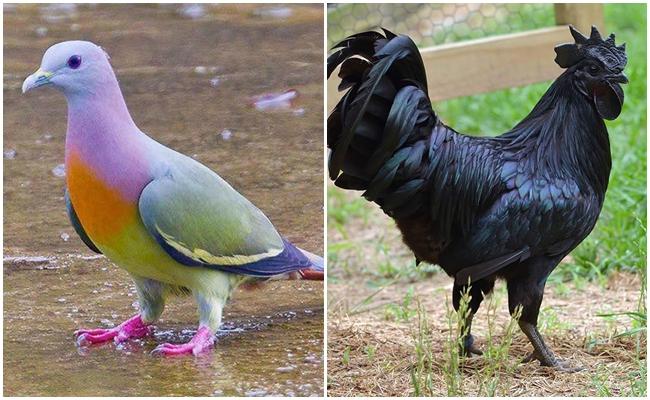 Gördüğünüzde Sizi Şaşırtacak Renklere Sahip Olan 19 Mucize Hayvan