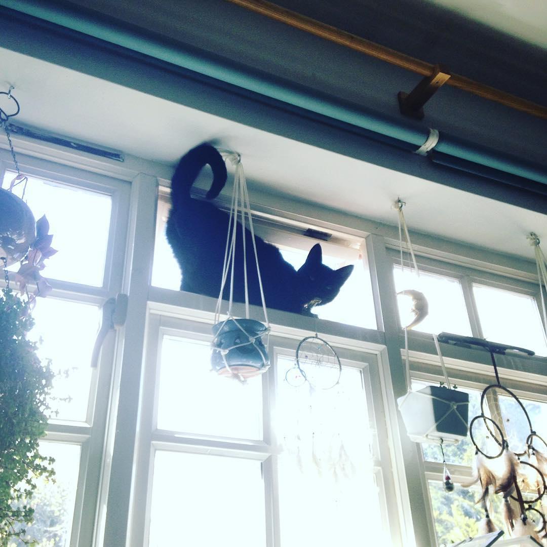 kedi-annesi-anneler-gunu-patiliyo-5
