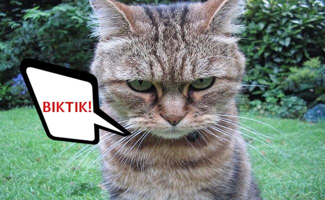 Kedi Sahiplerinin Artık Duymaktan Bıktığı 15 Sevimsiz Cümle