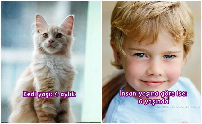 Kedi Yaşı ve İnsan Yaşı Karşılaştırmalı Görselleriyle Kediniz Aslında Bize Göre Kaç Yaşında?