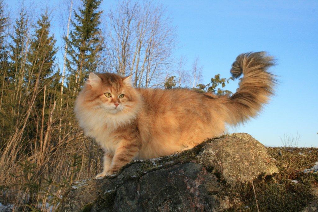 kedi-yasi-kopek-yasi-patiliyo-13