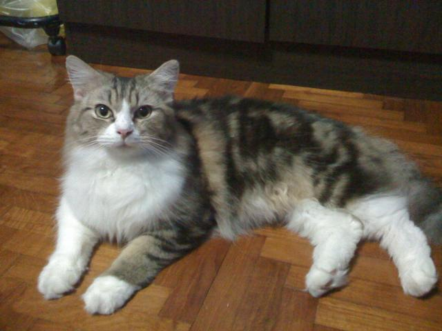 kedi-yasi-kopek-yasi-patiliyo-17