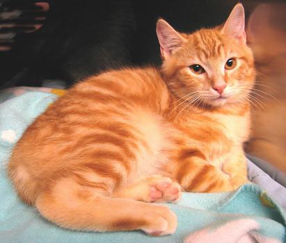 kedi-yasi-kopek-yasi-patiliyo-19