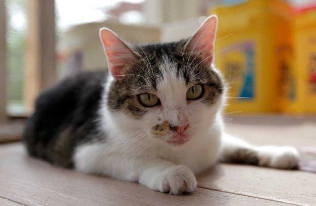 kedi-yasi-kopek-yasi-patiliyo-31