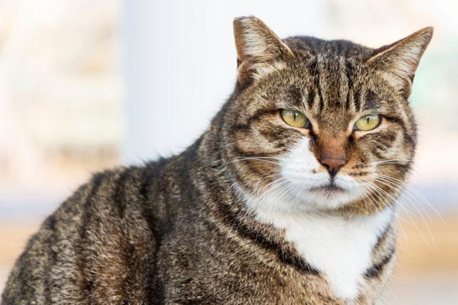 kedi-yasi-kopek-yasi-patiliyo-33