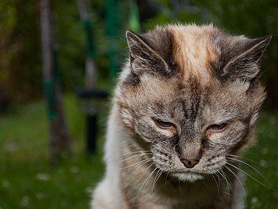 kedi-yasi-kopek-yasi-patiliyo-37