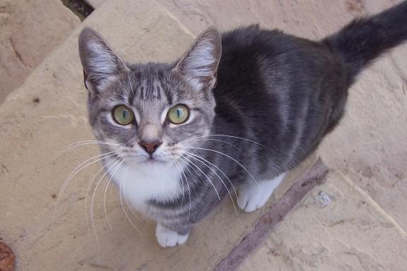 kedi-yasi-kopek-yasi-patiliyo-7