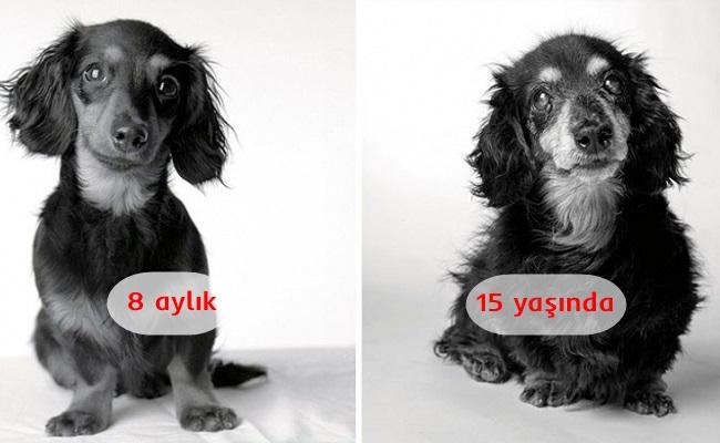 Köpekler Nasıl Yaşlanır: Gözleri Buğulandıracak 20 Yıllık Fotoğraf Projesi