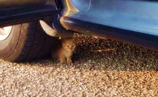 Arabanın Altında Miyavlayan Çaresiz Yavru Kedi ve Hayatının Sonrası…