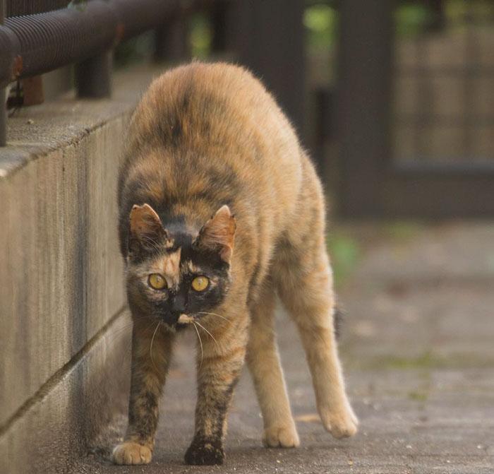japon-sokak-kedileri-patiliyo-10