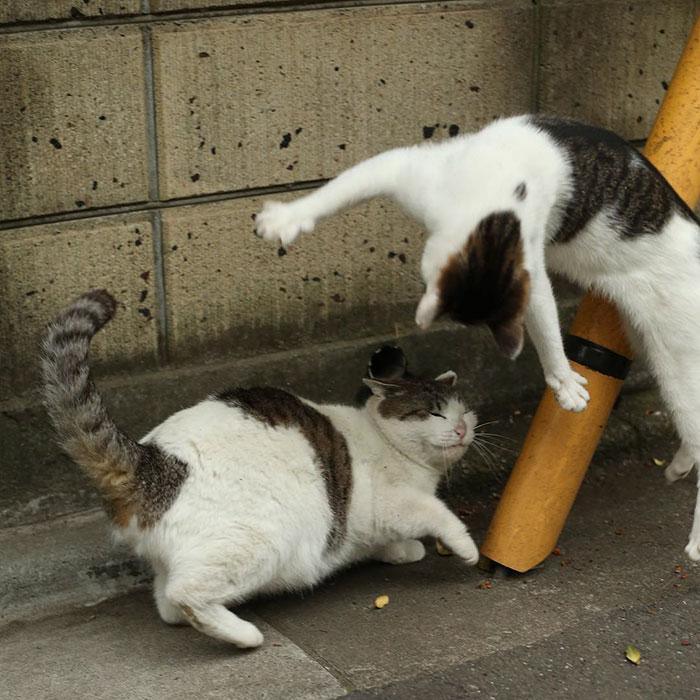 japon-sokak-kedileri-patiliyo-15