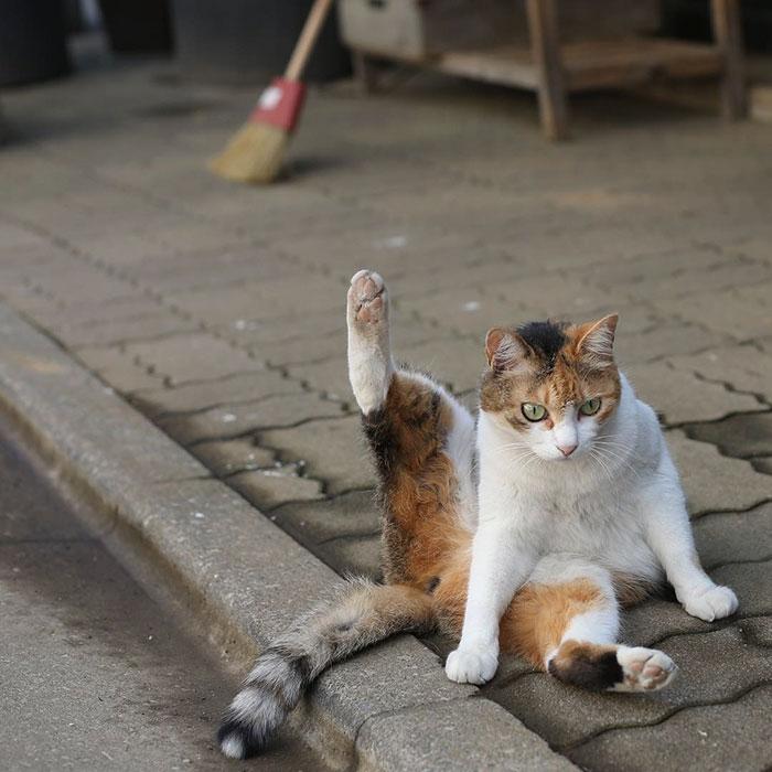 japon-sokak-kedileri-patiliyo-16