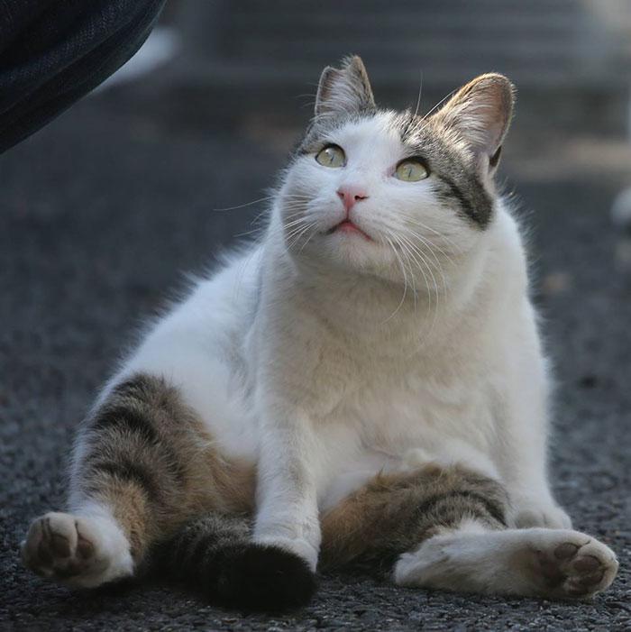 japon-sokak-kedileri-patiliyo-18