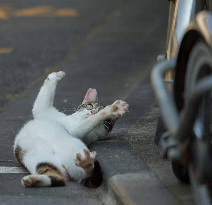 japon-sokak-kedileri-patiliyo-19