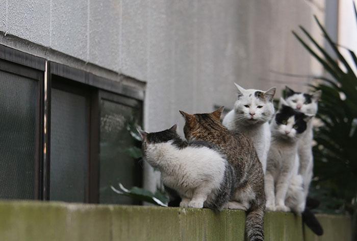 japon-sokak-kedileri-patiliyo-4