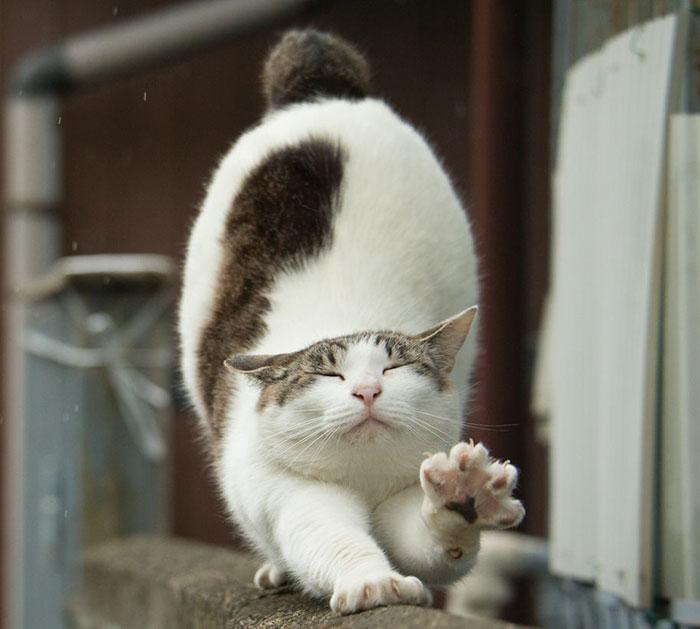 japon-sokak-kedileri-patiliyo-6