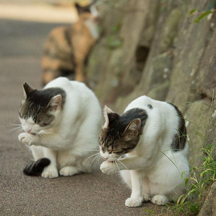japon-sokak-kedileri-patiliyo-8