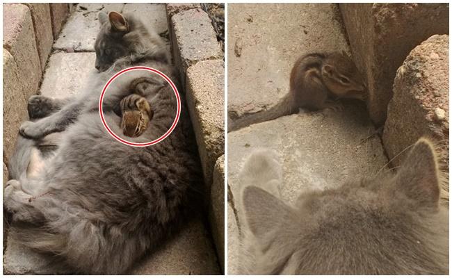 Kendine Sincap Kanka Yapan Kedinin Dostluğundan 7 Mis Gibi Fotoğraf