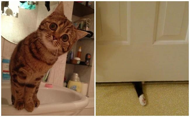 Kedilerin Tuvalet Aşklarını Gözler Önüne Seren 12 Miyavsal Fotoğraf